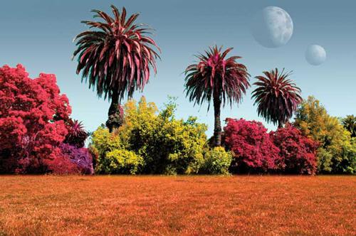 plantes-de-colors.jpg